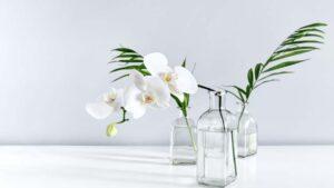 orchideavirágzás